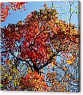 Fall Trees Of Wnc Canvas Print