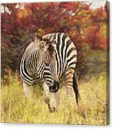 Fall Zebra Canvas Print
