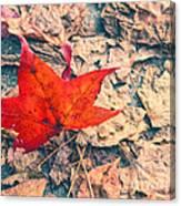 Fallen Red Leaf Canvas Print