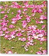 Fallen Rhododendron Canvas Print