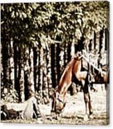 Fallen Soldier Canvas Print