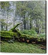 Fallen Stump Canvas Print