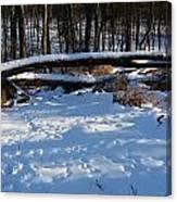 Fallen Tree Deertrails In Winter Canvas Print