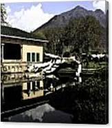 Fallen Tree In Water Pool Canvas Print