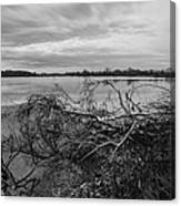 Fallen Trees At The Lake Canvas Print