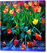 Fallen Tulips Canvas Print