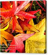 Falling Colors Fall Leaves Canvas Print