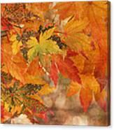 Falling Colors I Canvas Print