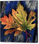 Falling For Colour Canvas Print