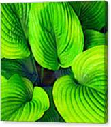 Falling Into Green Canvas Print