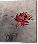 Falling Leaf Canvas Print