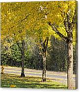 Falling Leaves From Neighborhood Beech Trees Canvas Print