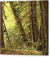 Falling Trees In The Rainforest Canvas Print