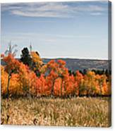 Fall's Splendor - Casper Mountain - Casper Wyoming Canvas Print