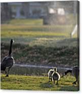 Family Affair Canvas Print