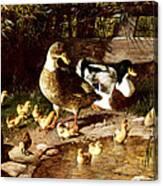 Family Of Ducks Canvas Print