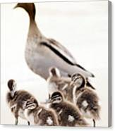 Family Of Ducks Canvas Print