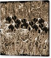 Family Portrait Before The Hunt-featured Picture In Large Dogs Only Group Canvas Print