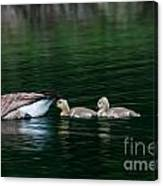 Family Swim Canvas Print
