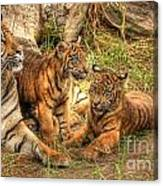Tiger Family Canvas Print
