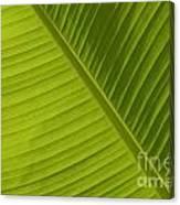 Fan Of Green 2 Canvas Print