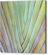 Fan Palm Abstract 2 Canvas Print