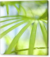 Fan Palm Fronds Canvas Print