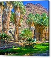 Fan Palms By The Creek In Lower Palm Canyon In Indian Canyons Near Palm Springs-california Canvas Print
