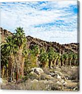 Fan Palms Line The Creek In Andreas Canyon In Indian Canyons-ca Canvas Print