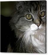 Fancy Cat Canvas Print