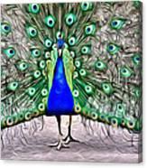 Fanning Peacock Canvas Print