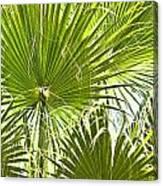 Tropical Fans Canvas Print