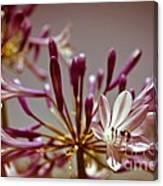 Fantastic Bloom Canvas Print