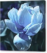 Fantastic Flowers  Canvas Print