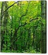 Fantastic Forest Canvas Print