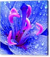 Fantasy Flower 6 Canvas Print