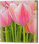 Fantasy In Pink - Tulips Canvas Print