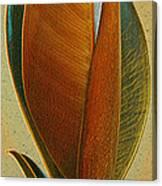 Fantasy Leaf Canvas Print
