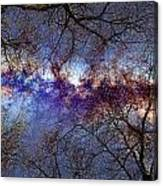 Fantasy Stars Milkyway Through The Trees Canvas Print