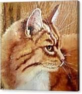 Farm Cat On Rustic Wood Canvas Print