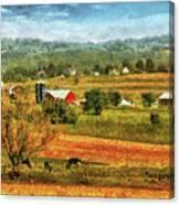 Farm - Cow - Cows Grazing Canvas Print