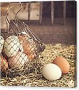 Farm Fresh Eggs Canvas Print