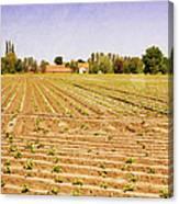 Farm Landscape Canvas Print