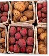 Farm Potatoes Canvas Print