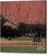 Farmer In Field In Northern Argentina Canvas Print