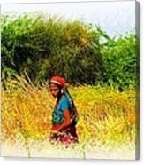 Farmers Fields Harvest India Rajasthan 2a Canvas Print
