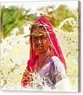 Farmers Fields Harvest India Rajasthan 8 Canvas Print