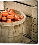 Farmers Market Plum Tomatoes Canvas Print