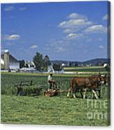 Farming The Old Order Way Canvas Print
