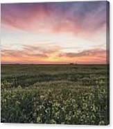 Farmland Sunset 2 Canvas Print